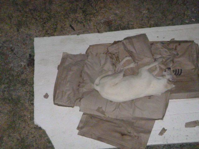 White enjoyed the cardboard bed